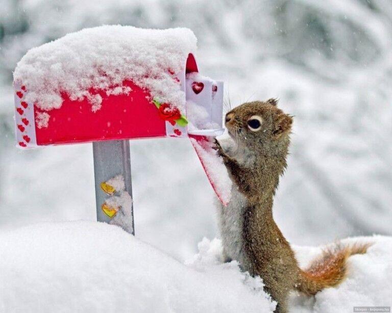 Családi nap Királyréten: Advent, karácsony az erdőben