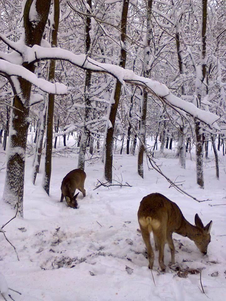 Téli vadetetés