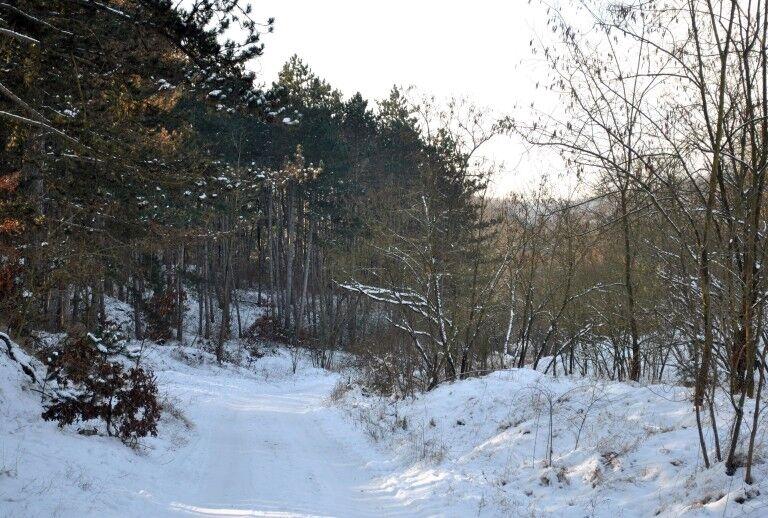 Téli regék a természetről – Előadás a Körösvölgyi Látogatóközpontban