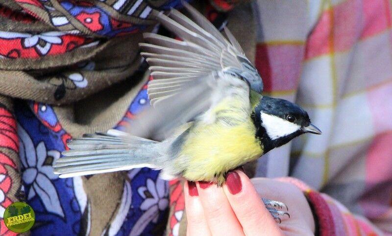 A tél madarai a Bél-kő természetvédelmi területen