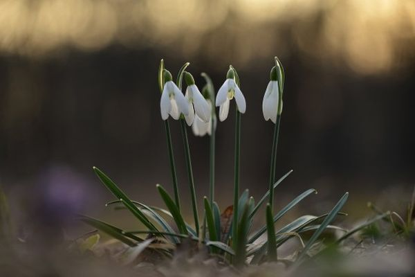 Hóvirágos hétvége a hédervári Vadaskerti erdőben