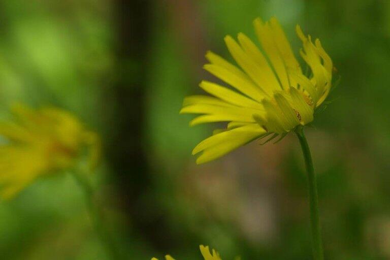V. Nőnapi Virág Futás a Hármashatár-hegyen