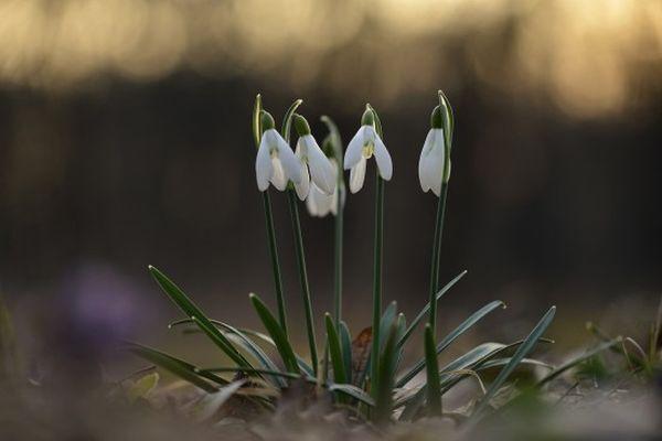 Hóvirágos hétvége a Hanyban