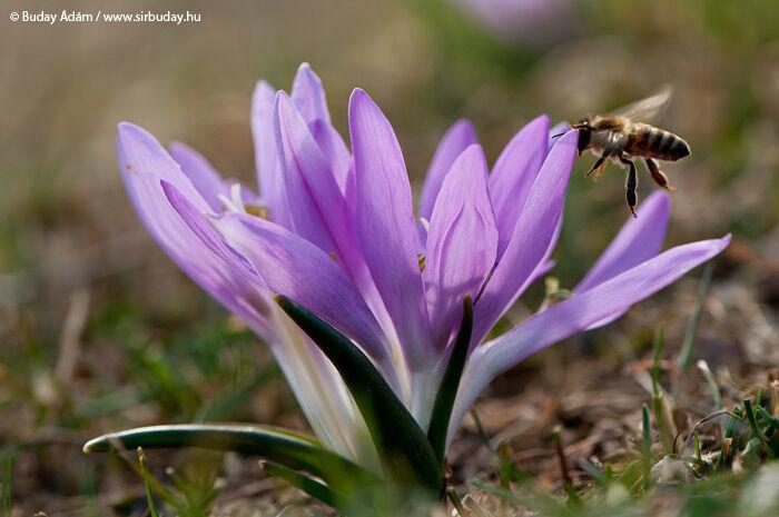 A tavasz hírnökei – Egyhajúvirág túra a Csodaréten