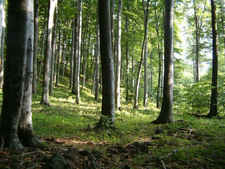 Gergely napi erdőtakarítás a Kígyósi Nagyerdőn