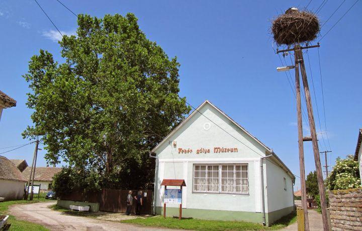 Fehér Gólya Múzeum: az ártér emlősei