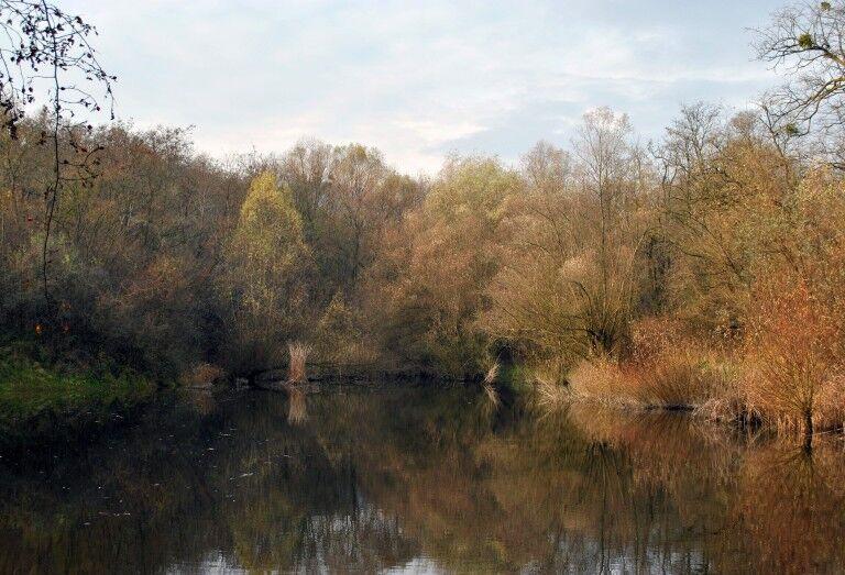Víz Világnapja: a pilisszentiváni Jági-tó lakói