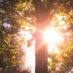 Tavaszköszöntő túra a Kerecsendi Erdőben