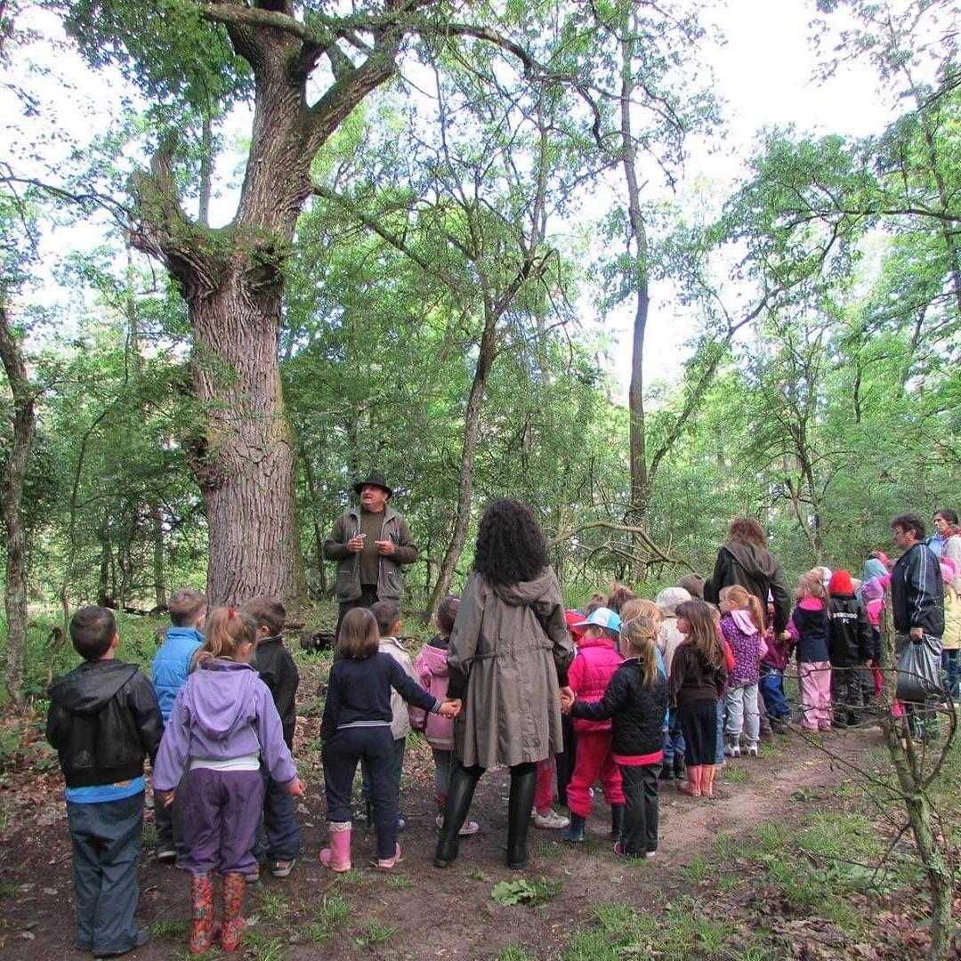 Vadász Göri Erdészeti Erdei Iskola